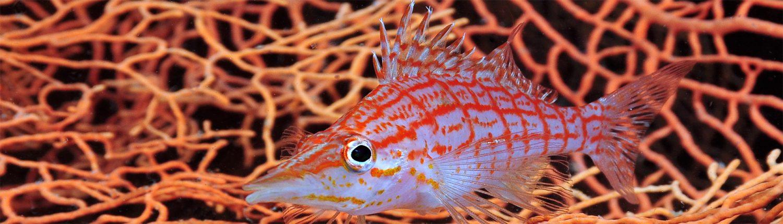 fish in fan-coral