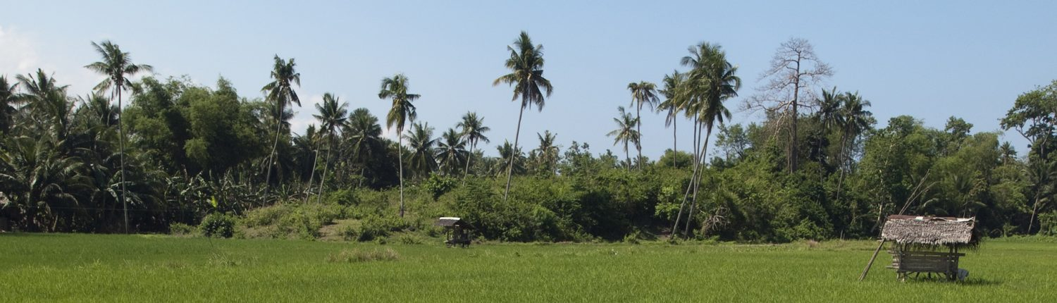Rice fields of Moalboal