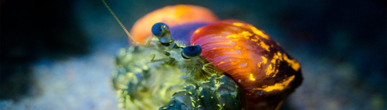 Fluorescend diving