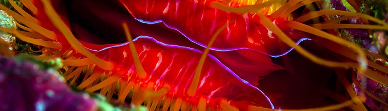 Electric clam