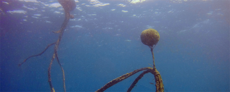 Magic Island Dive Resort Moalboal Double Buoy mooring lines